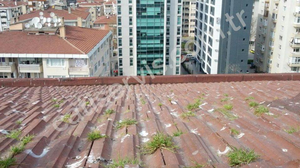 Beşiktaş Çatı Bakımı